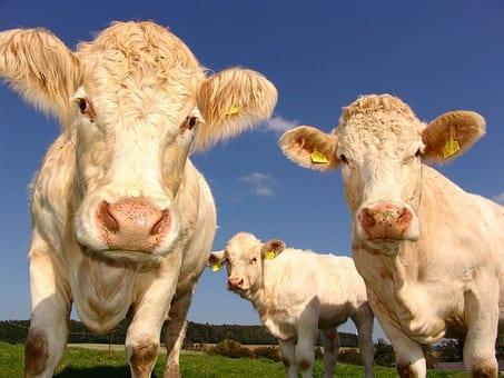 Jak usprawnić hodowlę zwierząt?