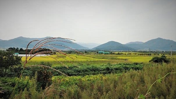 krajobraz zelonej trawy w oddali pagórki