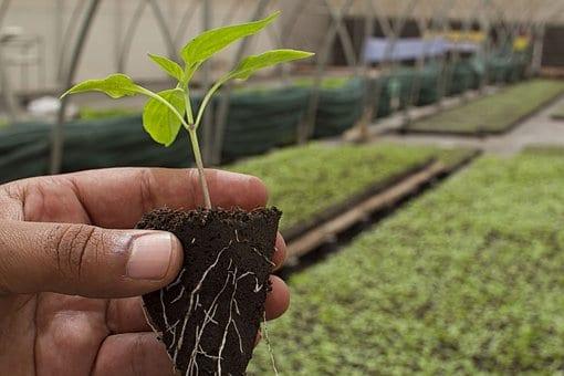 rolnk trzyma w dloni sadzonke