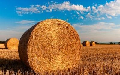 Premie dla młodych rolników – bezzwrotna pomoc gotówkowa