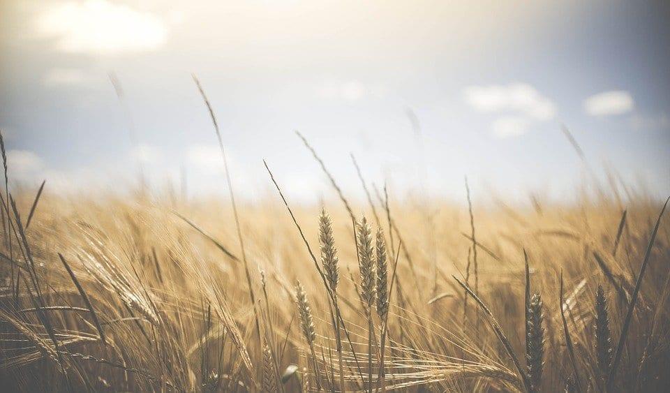 Kredyt hipoteczny dla rolników – co musisz wiedzieć przed podjęciem decyzji