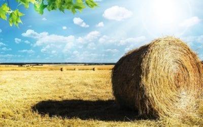 """""""Tworzenie grup producentów i organizacji producentów"""" PROW 2014 – 2020 – nabór wniosków, co musisz wiedzieć"""