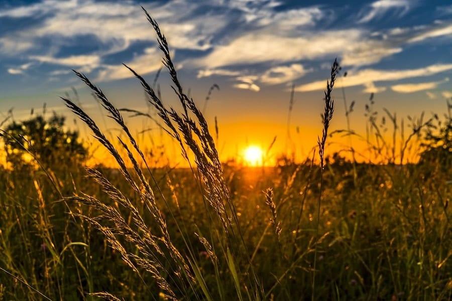 Płatności dla rolników przekazujących małe gospodarstwa – wrześniowy nabór