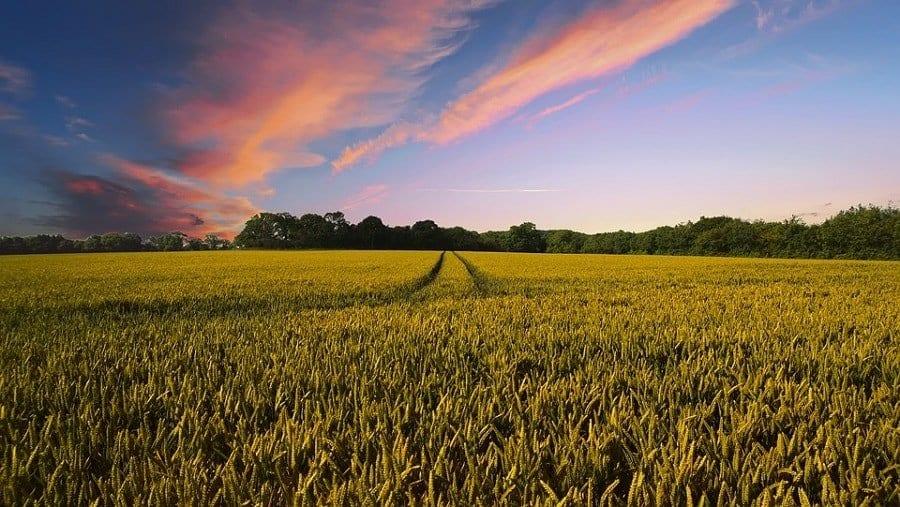 zapomoga dla rolników
