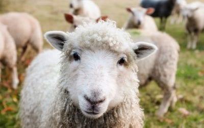 Portal IRZplus – nowy portal do rejestracji zwierząt