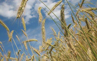 Zakup nasion i nawozów – jak sfinansować bez gotówki?