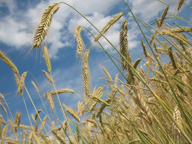Zakup nasion i nawozów – jak sfinansować bez gotówki