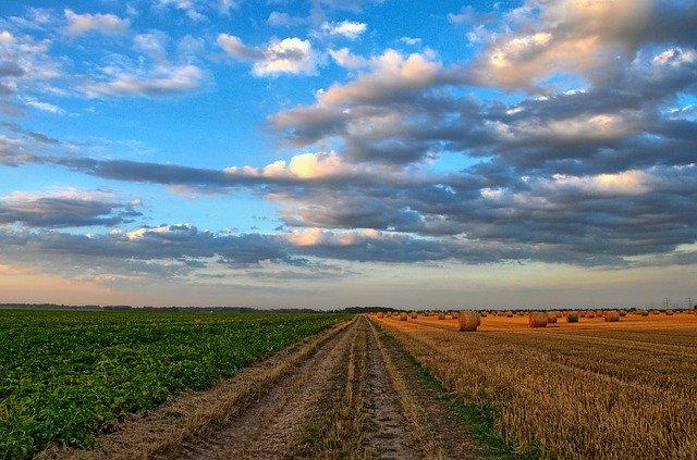 Prowadzenie małego gospodarstwa rolnego – wady i zalety