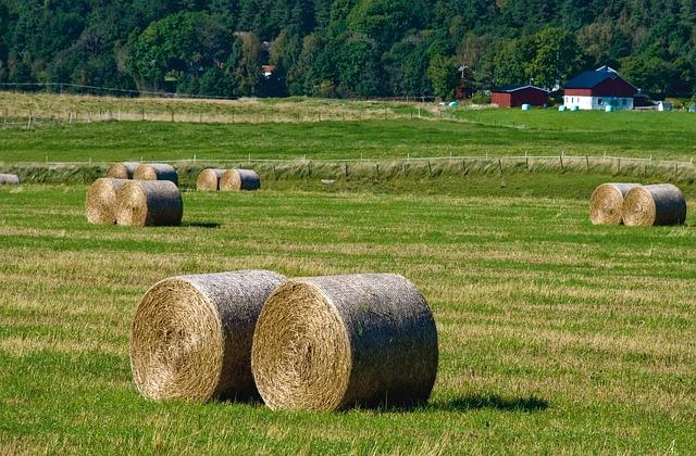 Założenie gospodarstwa ekologicznego – od czego zacząć